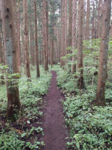 A lovely wooded section of the path in the Usui Pass.